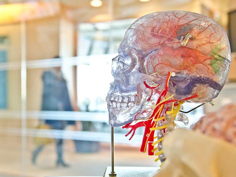 Artificiell intelligens avslöjar mekanism bakom hjärntumör