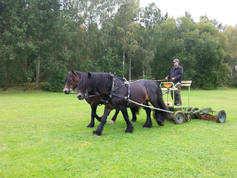 Kommuner samlas i Uppsala för att tala om gatu – och parkförvaltning
