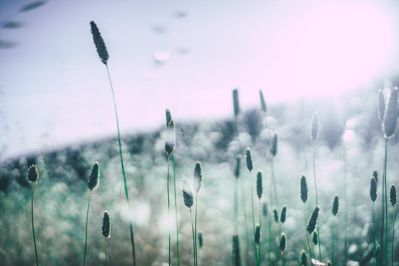 Allergiforskare utsedd till ny hedersdoktor