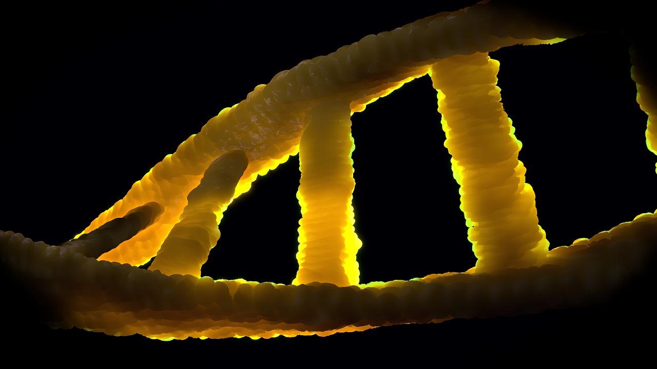 Den genetiska variationen hos 1000 förhistoriska individer ska kartläggas