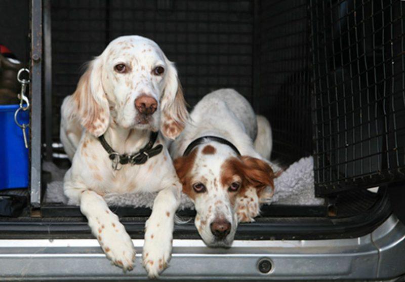 hundar i uppsala