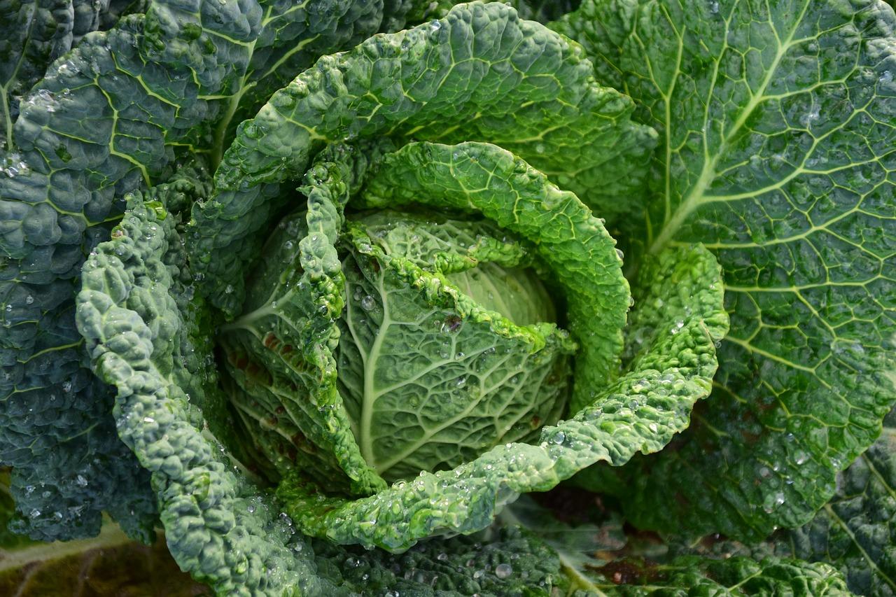 SLU: Köksväxter viktiga i 1700-talets jordbruk