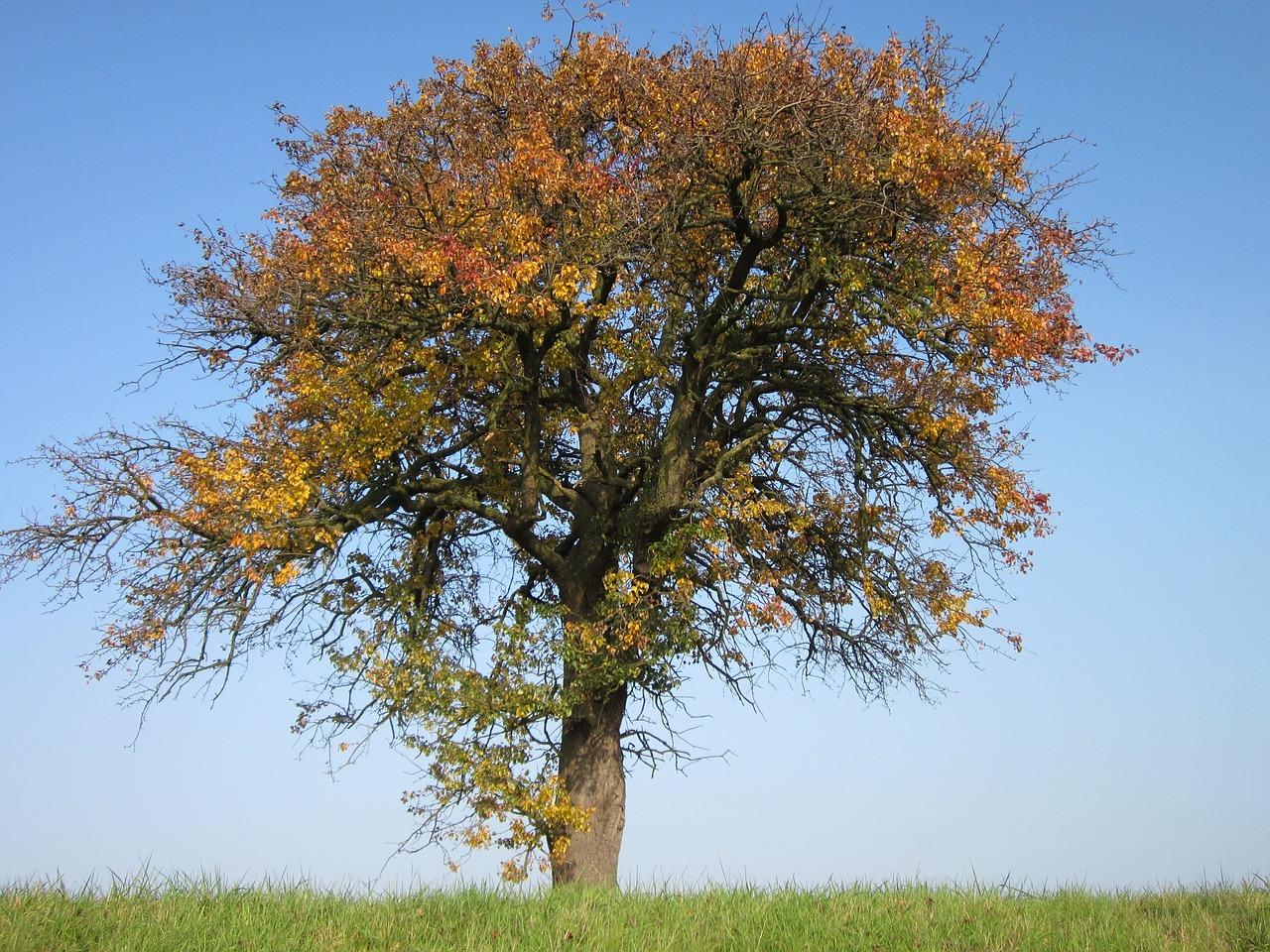 Nya träd ska ersätta gamla i Östra Sala backe