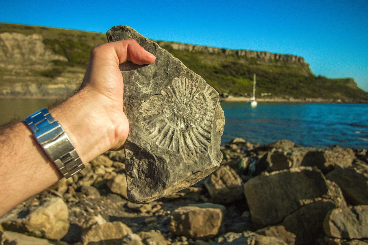 Fossila fotspår utmanar etablerade teorier om människans ursprung