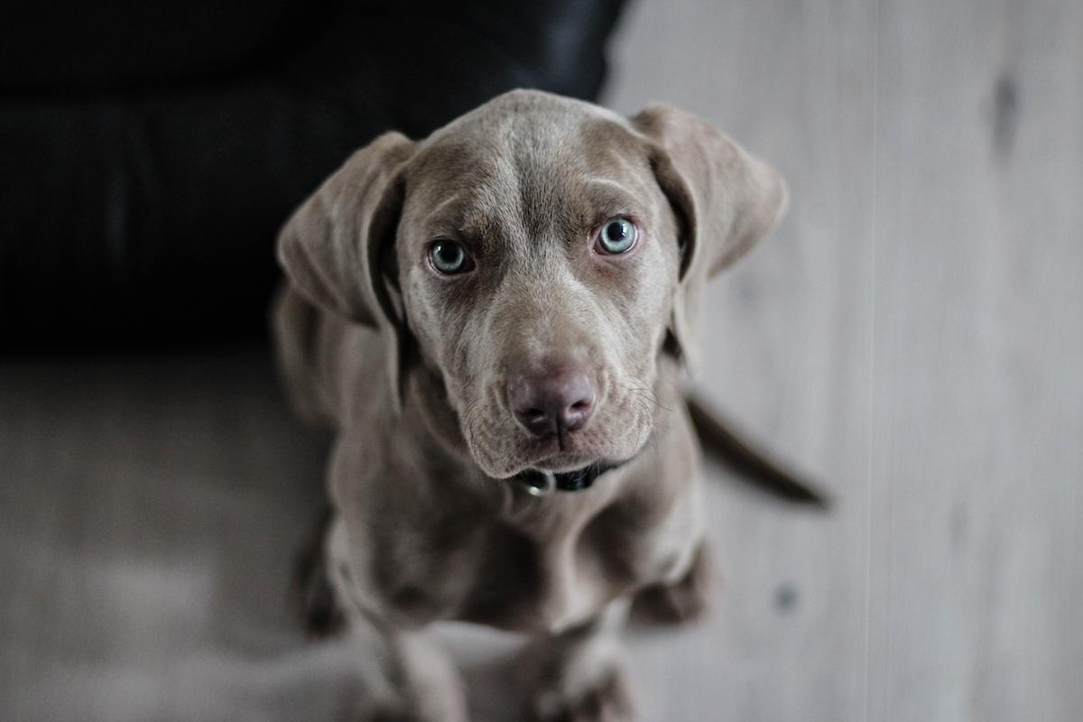 Hundägande kopplat till lägre dödlighet