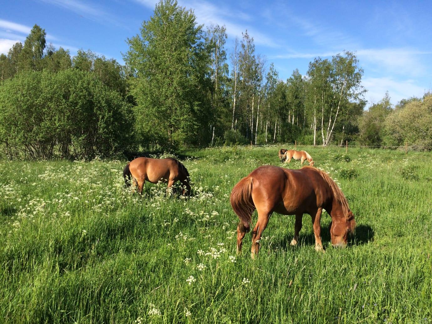 Bete ger näringsrikare vegetation och variation i landskapet