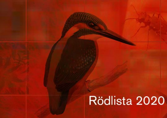 Fortsatt försämring för Sveriges arter