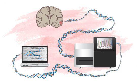 Ny metod att identifiera gener som kan driva hjärntumörer