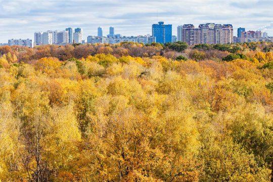 Städernas träd viktiga för miljö och ekonomi