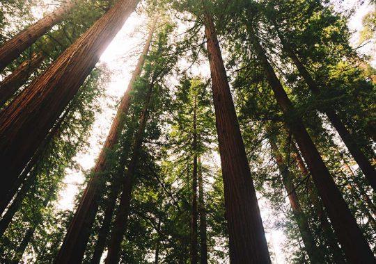 Regeringen föreslår nya Natura 2000-områden